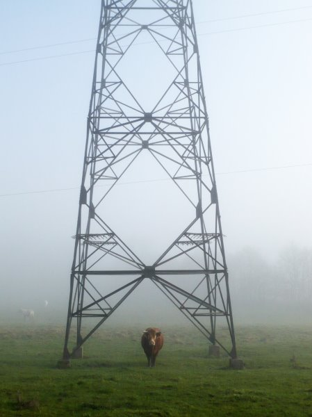 Cow and Pylon content aware move